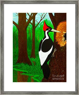 Ivory-billed Woodpecker Framed Print