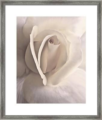Ivory Splendor Rose Flower Framed Print