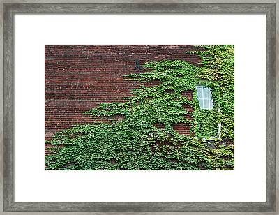 Ivy Covered Window Framed Print by Gary Slawsky