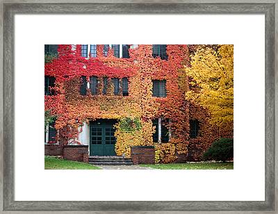 Ivy League Framed Print