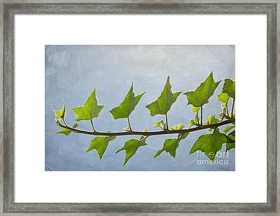 Ivy To The Left Framed Print