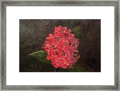 Ixora Bloom Framed Print by Maria Soto Robbins