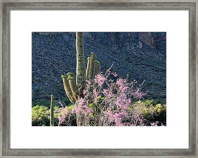 Jacarandas And Saguaros Framed Print by Nathan Mccreery