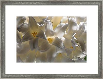 Framed Print featuring the photograph Jacinthe by Sylvie Leandre