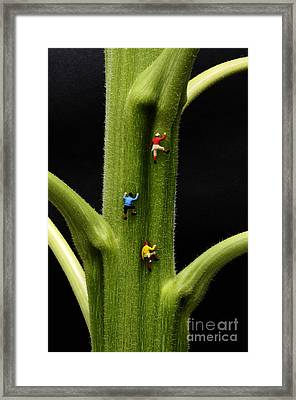 Jack And His Friends Climb The Beanstalk Framed Print