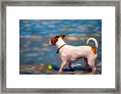 Jack At The Beach Framed Print