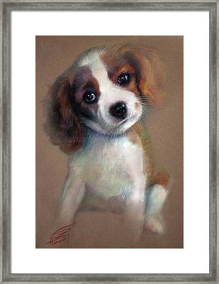 Jack Russell Terrier Dog Framed Print by Ylli Haruni