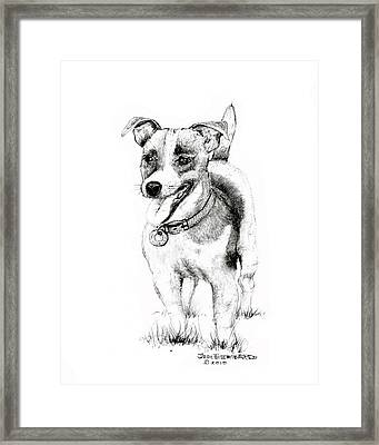 Framed Print featuring the drawing Jack Russell Terrier by Jim Hubbard