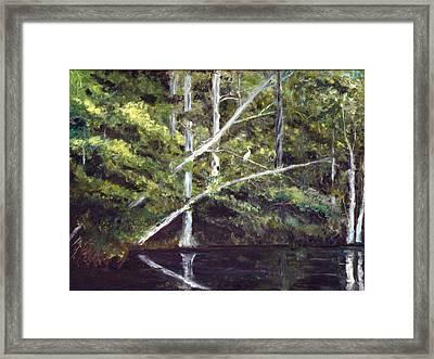 Jackson Bluff On The Waccamaw River Framed Print by Phil Burton