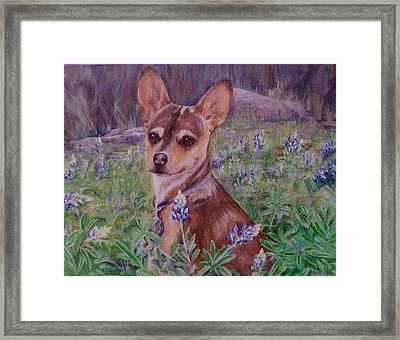Jacob  In Bluebonnets Framed Print
