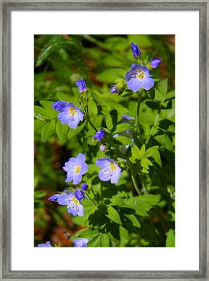 Jacob's Ladder Framed Print