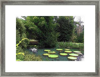 Jade Jewel Framed Print by Sheri McLeroy