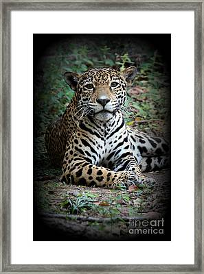 Framed Print featuring the photograph Jaguar Portrait by Kathy  White