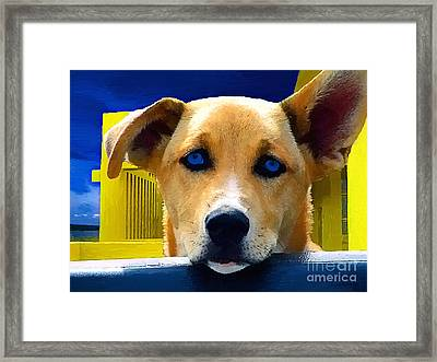 Jake Framed Print by Jerry L Barrett
