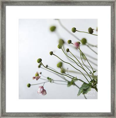 Japanese Anemones Framed Print by Ruby Hummersmith