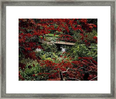 Japanese Garden, Through Acer In Framed Print by The Irish Image Collection