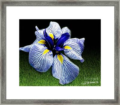Japanese Iris Ensata - Botanical Wall Art Framed Print by Carol F Austin