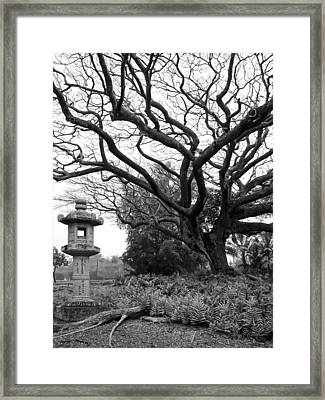 Japanese Lantern And Tree - Liliuokalani Park - Hilo Hawaii Framed Print