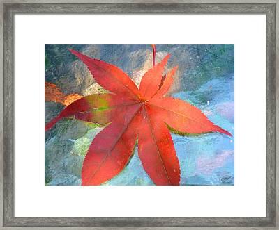 Japanese Maple Framed Print by Beth Akerman