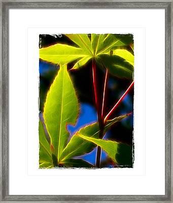 Japanese Maple Leaves Framed Print by Judi Bagwell