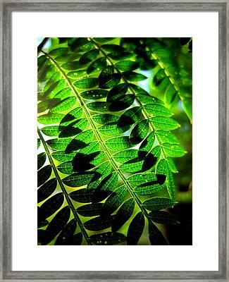 Jaqaranda Branches Framed Print by Catherine Natalia  Roche