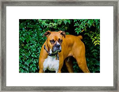 Jasmine Framed Print by Barry Jones