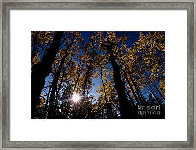 Jasper - Autumn Aspens Framed Print by Terry Elniski