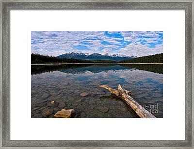 Jasper - Patricia Lake Morning 2 Framed Print by Terry Elniski
