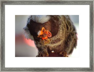 Jaw Breaker  Framed Print by Barry R Jones Jr
