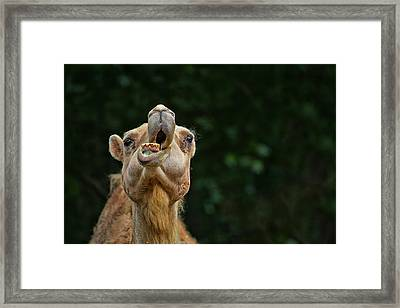Jaw Dropping Framed Print by Karol Livote