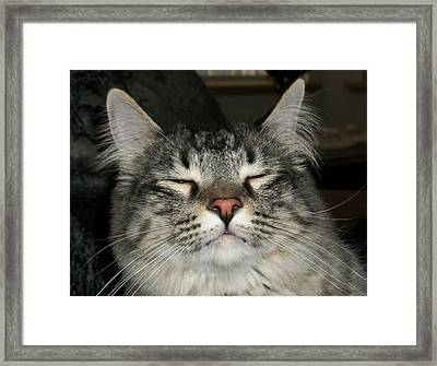 Jeff Framed Print by Paula Greenlee