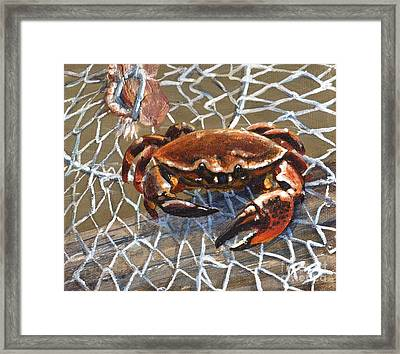 Jekyll Stone Crab Framed Print by Pat Burns