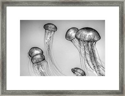 Jellies In Gray Framed Print by Tap On Photo