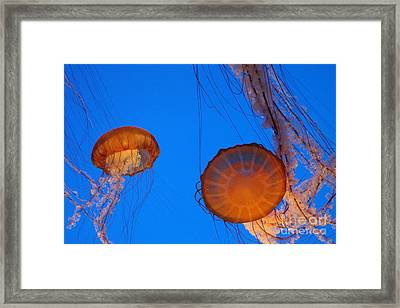 Jellies Framed Print by Tap On Photo
