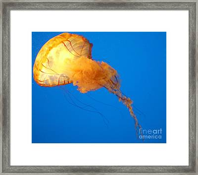 Jelly Belly Framed Print by Elizabeth Hernandez