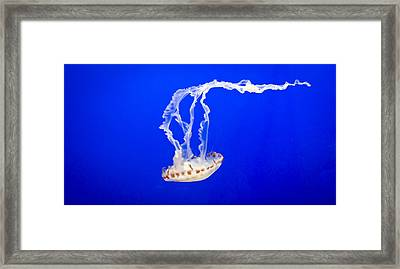 Jelly Fish Framed Print by Heather Applegate