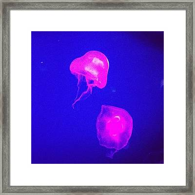 Jelly Fish #londonaquarium #london Framed Print