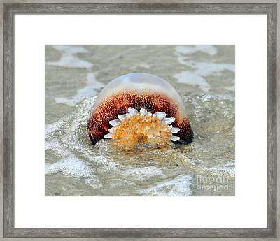 Jelly In A Jam Framed Print by Al Powell Photography USA