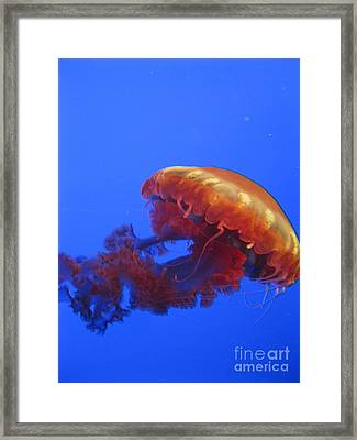 Jelly Framed Print