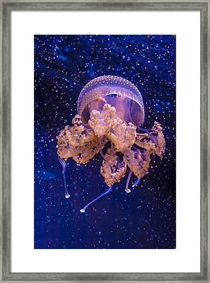Jellyfish Framed Print by Goran Besenski