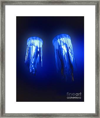 Jellyfish In Maui Ocean Center Framed Print by Joan  Minchak