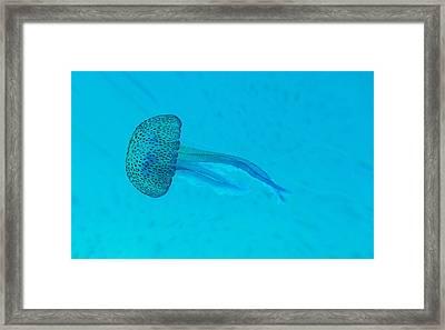 Jellyfish In  Wild Framed Print