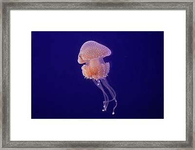 Jellyfish Framed Print by Pandiyan V