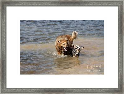Framed Print featuring the photograph Jesse And Gremlin Sharing by Jeannette Hunt