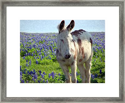 Framed Print featuring the photograph Jesus Donkey In Bluebonnets by Linda Cox