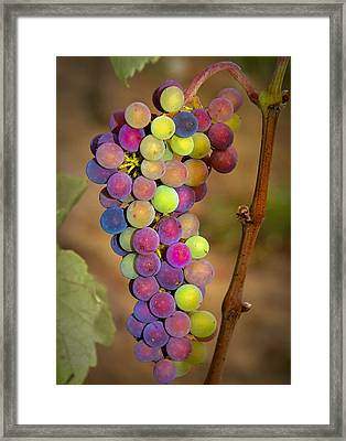 Jewel Tones Framed Print