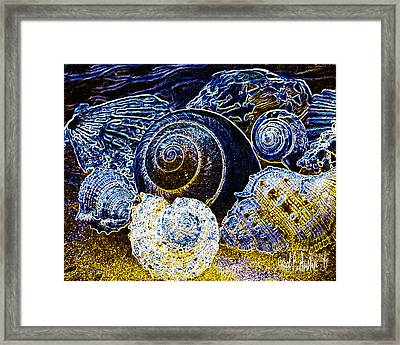 Abstract Seashell Art Framed Print by Carol F Austin