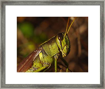 Jiminy Cricket Never Looked This Good Framed Print by Billy  Griffis Jr