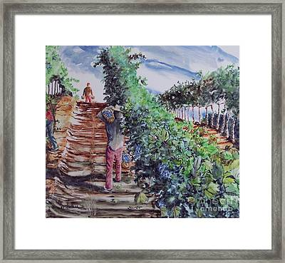 Jims Harvest Framed Print by W R  Hersom