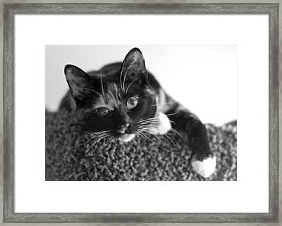 Jocko Framed Print by Lisa Phillips
